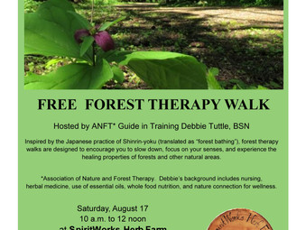 Free Forest Therapy Walk Saturday August 17th, 10-12