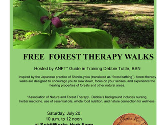 FREE Forest Therapy Walk Sat July 20th 10-12noon