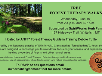 Forest Therapy Walks Wednesday June 19th, 2-4 and 5-7pm