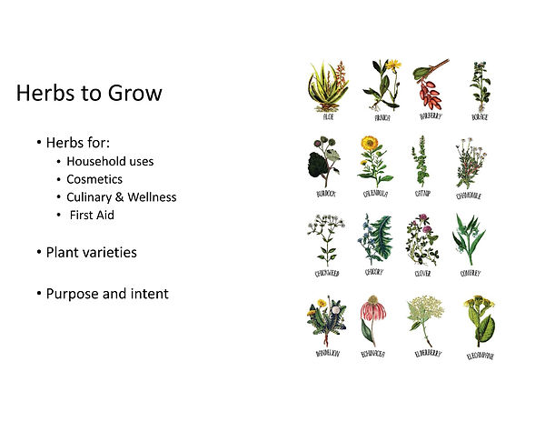 Free the Seeds - Growing herbs presentat