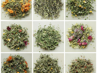 Tantalizing Teas with Intent from SpiritWorks