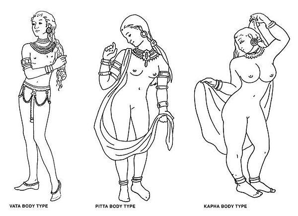 dosh body types drawing.jpg