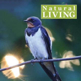 Magazine nature pages