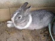 44 grey rabbit.jpg
