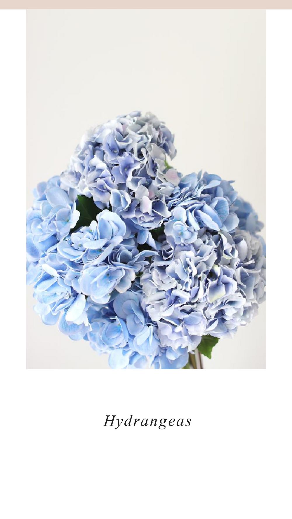Hydrangeas, Valentines Day Flowers