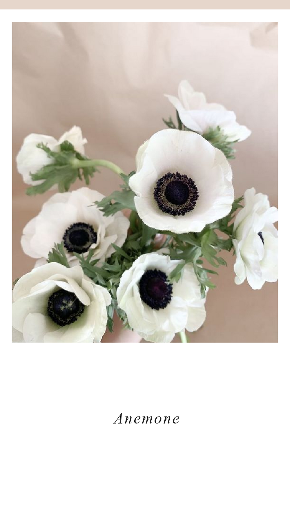 White and black Anemone flowers for valentines day