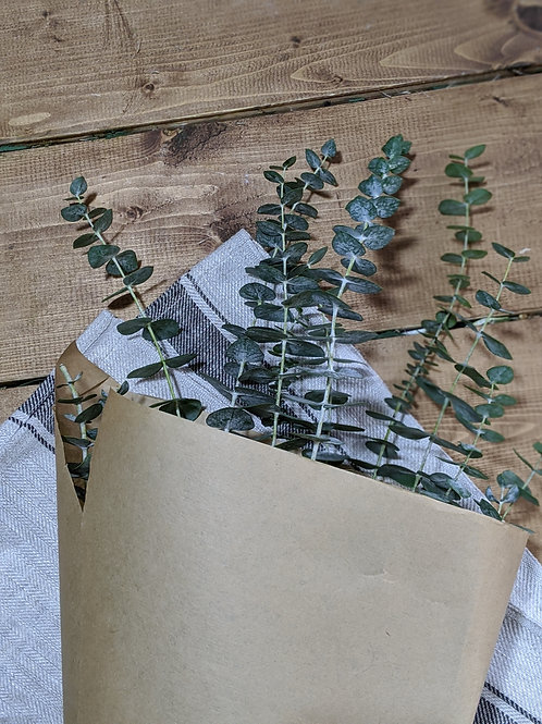Shower Eucalyptus Bunches - Preserved