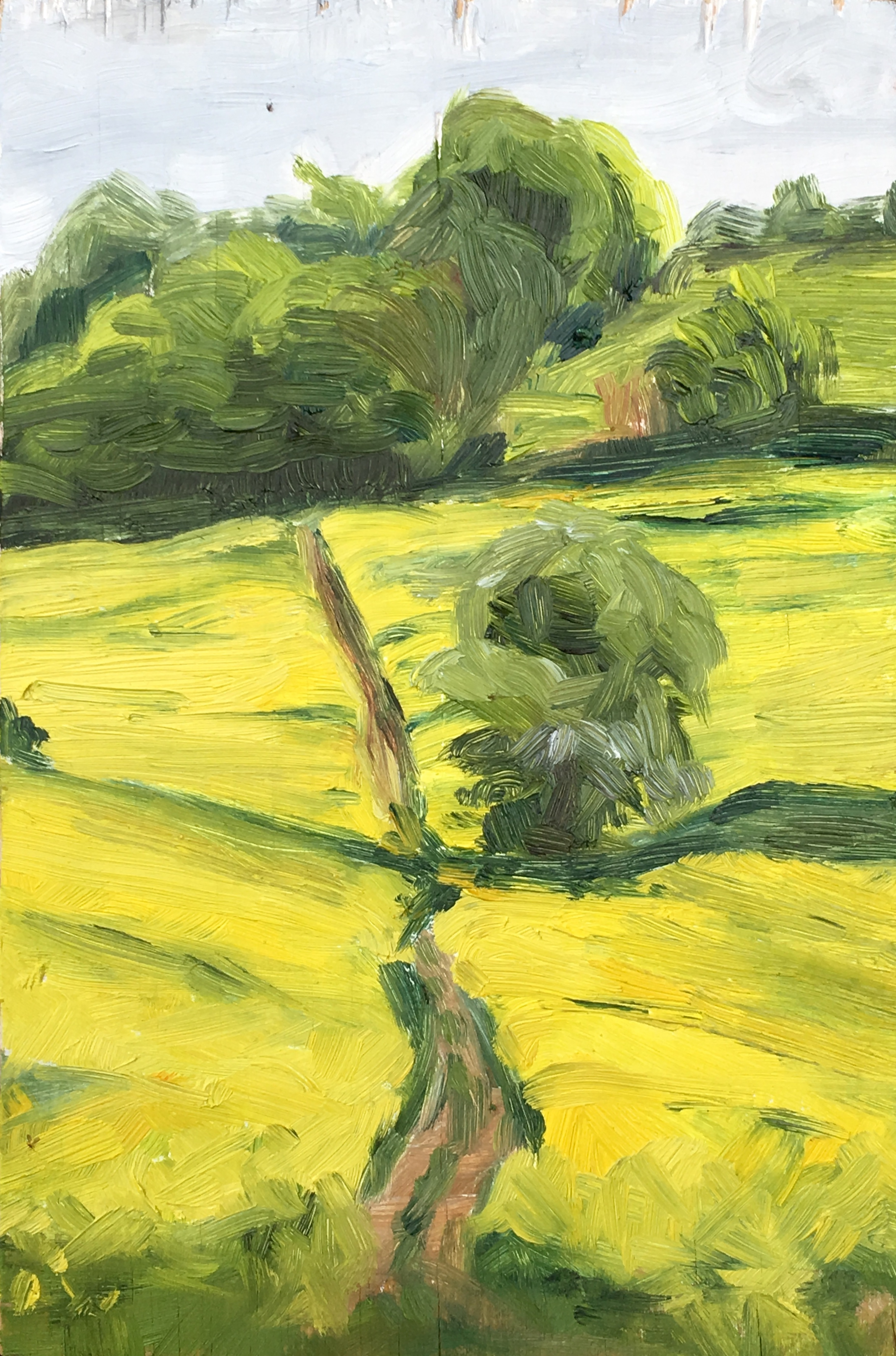 Yellow fields & ancient path
