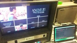 Live de Animais Fantásticos