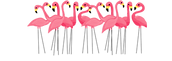 download-Flamingo-png-transparent-images