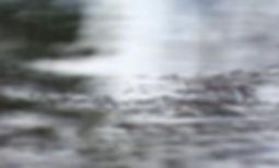 SDT image.jpg
