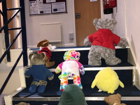 Bears on Training!