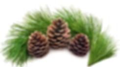 KRYKSA Cone Jam - Christmas Jam