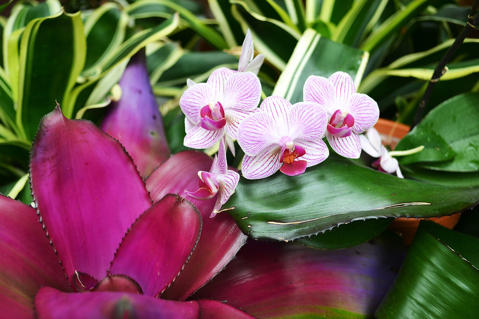 Orchid image by Skytower Studio miami
