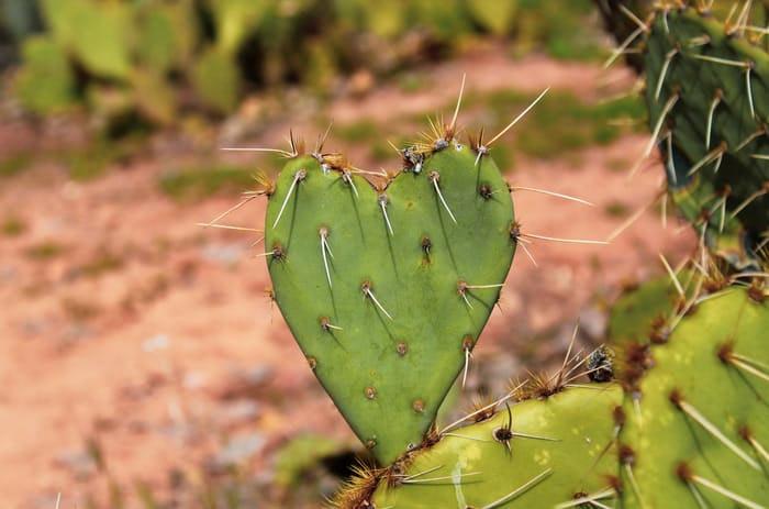 The Stubborn Kind of Love