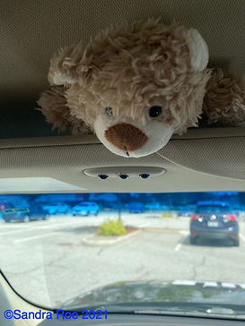 Mr. Snuggles - Co - Pilot with Gary Morgan in Canada 2021 - With Copyright©2021.jpg
