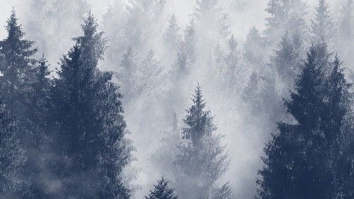 Foggy forest paint night March 13th