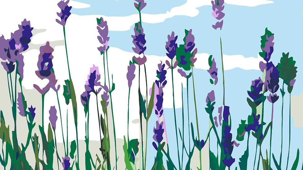 Lavender field paint by number kit
