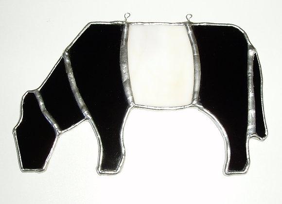 Beltie - Belted Galloway