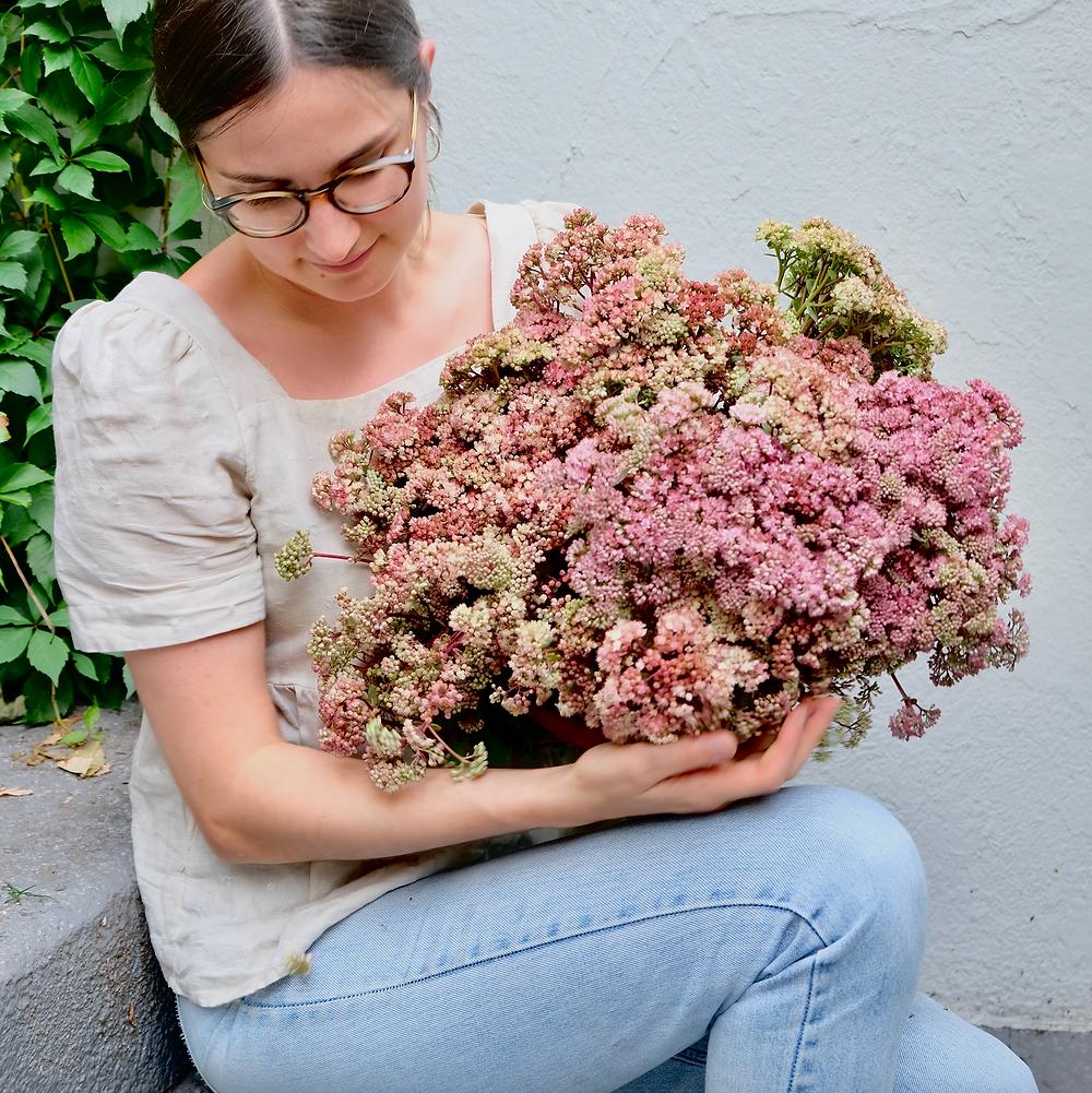 Sedum Fetthenne Blumenpost Blumen Saisonkalender
