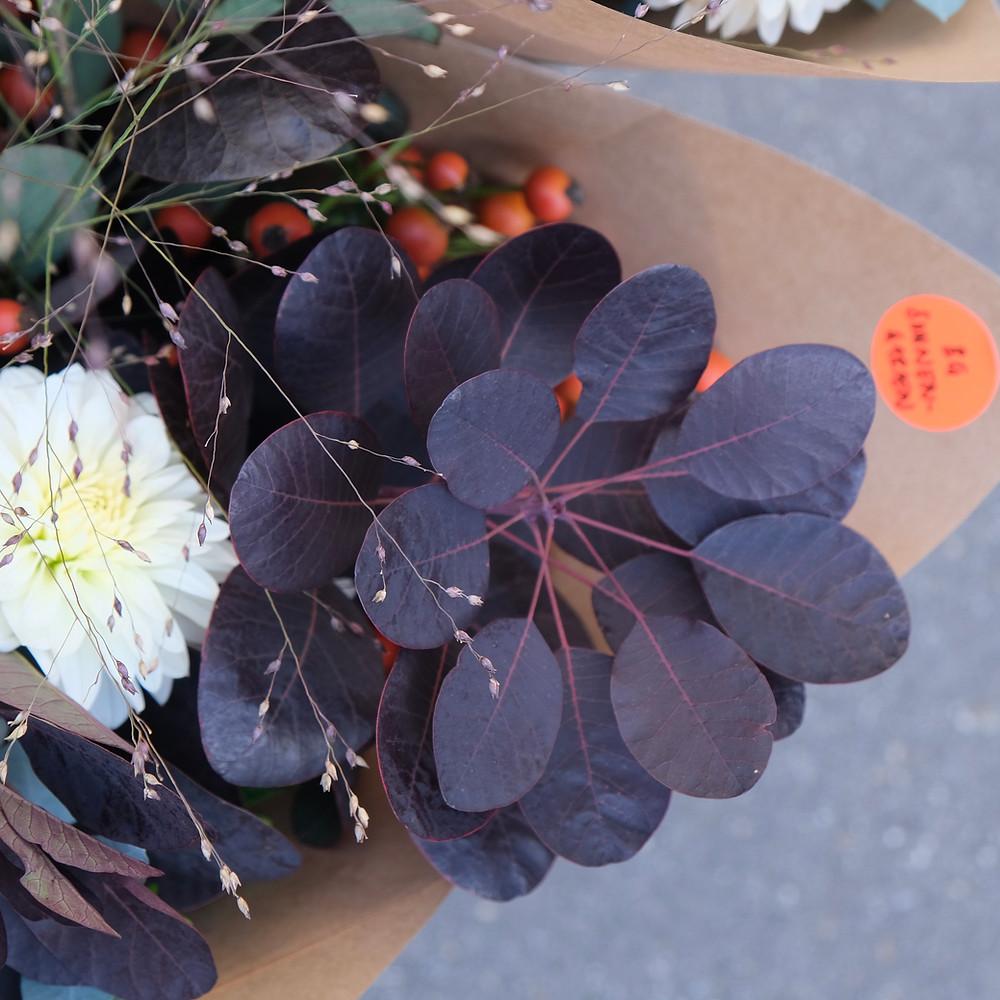 Blumenpost Blumenstrauss Cotinus Perückenstrauch Blumen bestellen liefern Schweiz Zürich