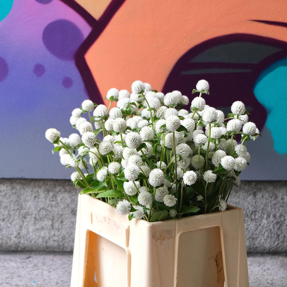 Blumenpost Blumenstrauss Kugelamaranth Gomphrena Blumen bestellen liefern Schweiz Zürich