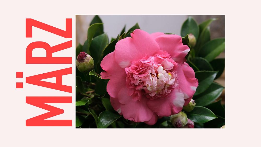 Saisonkalender März Blumenpost Schweiz