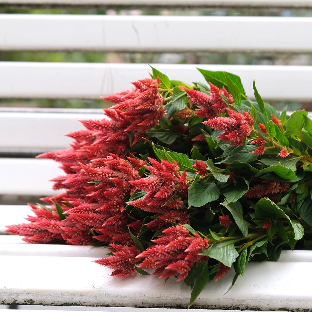 Blumenpost Celosia Blumen bestellen liefern Schweiz Zürich