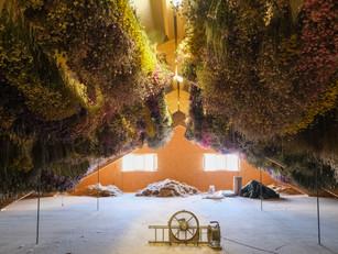 Trockenblumen: Die nachhaltigsten Blumen?