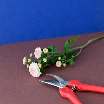 Blumenschere Blumen Schere schneiden Pflege Anschnitt Tipps Scissors flowers