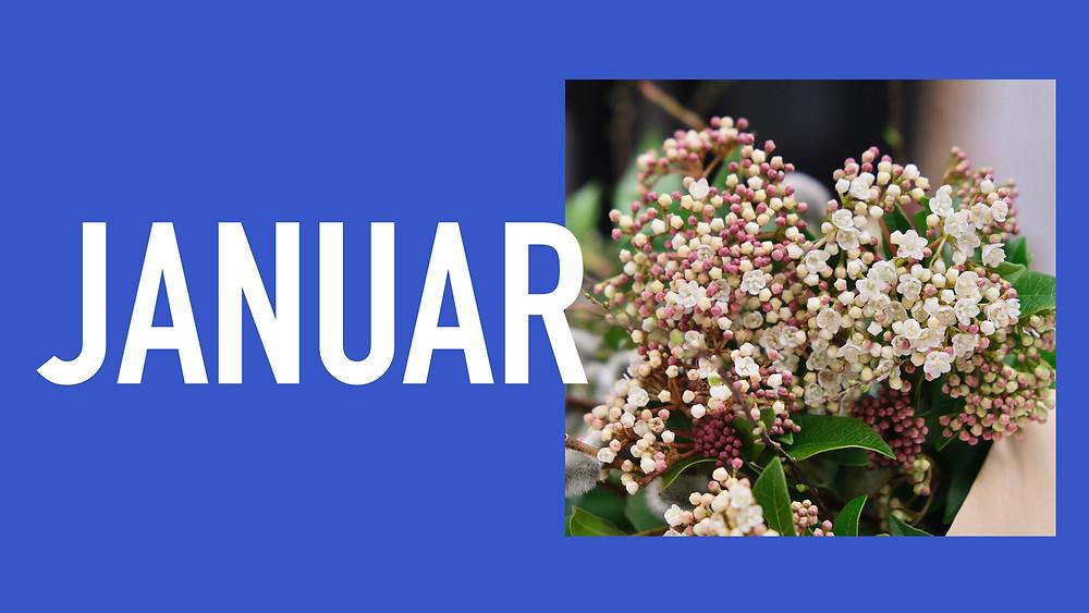 Saisonkalender Januar Blumenpost Schweiz