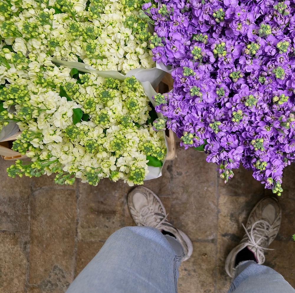 Blumen, Levkojen, Duft, Blumenpost, Schweiz