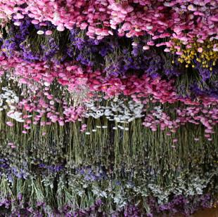 Trockenblumen: Bald sind sie da!