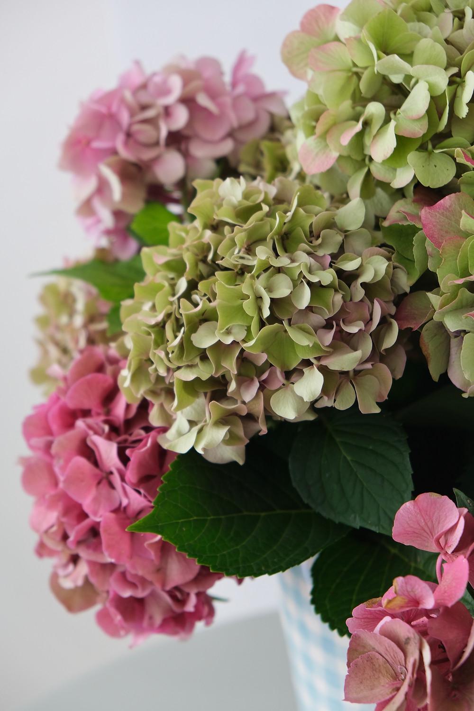 Hortensien Schweiz enSoie Startup Blumenpost Blumen Post