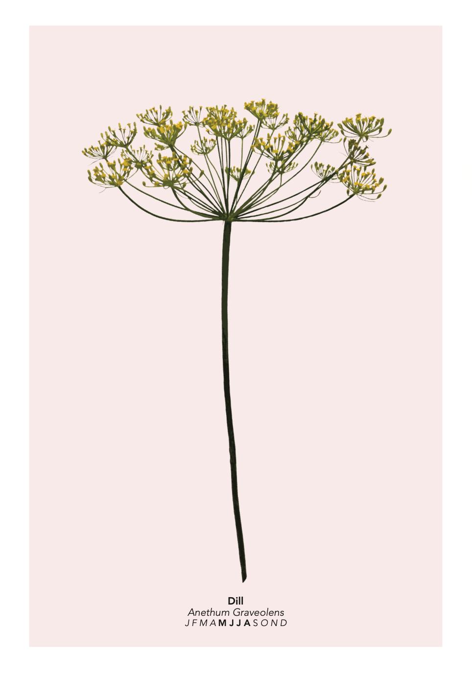 Blumenpost Saisonkalender Blumen Plakat Poster