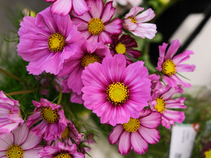 Die schönste Blumensaison ist jetzt!