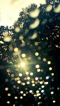 "~ aromatic message ~ NATURE  SELECTION "" 雨 rain """