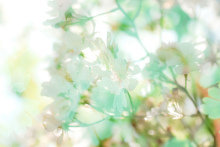 """~ aromatic message ~ FEELING SELECTION """" 平和 peace"""""""