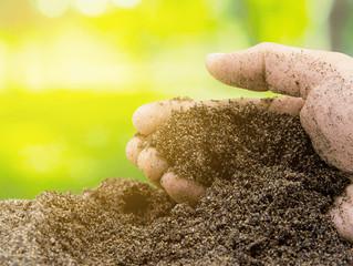 Entenda melhor a análise de solo realizada no laboratório da Cocatrel