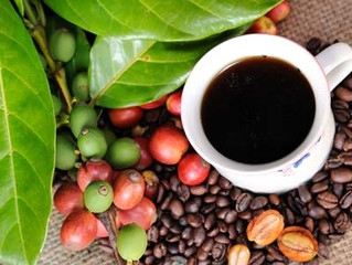 Cocatrel abre vagas para curso de cafés especiais