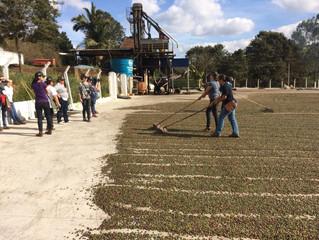Cafeína Cocatrel: cooperadas aprendem processos de pós colheita