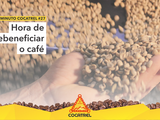 Hora de rebeneficiar o café!