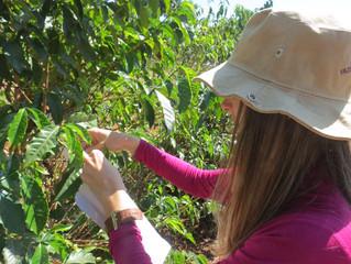 Cocatrel orienta seus cooperados para monitoramento dos cafezais e preparo para o início da colheita