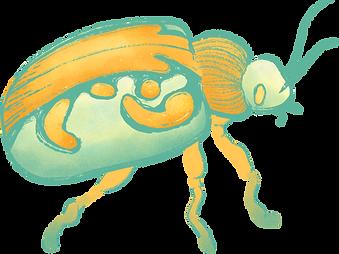 Beetle_edited.png