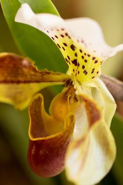 orchideenmesse_heidvolm-20150306-0068