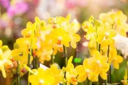 orchideenmesse_heidvolm-20150306-0075