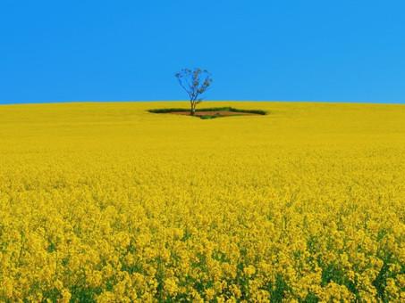 Resisting Monoculture