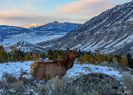 20191010_Yellowstone_RAD_5057.jpg