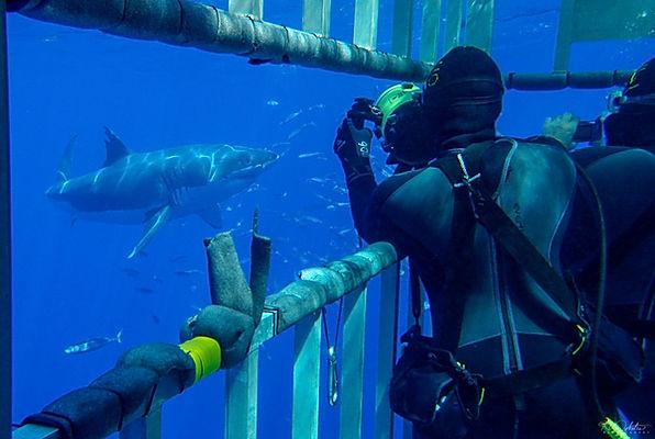 Sharks_RADykstra_article-15-7.jpg