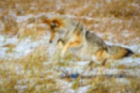 20191011_Yellowstone_RAD_4276.jpg